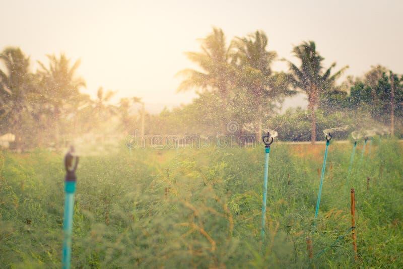 Αγρόκτημα με τον παφλασμό νερού από τους ψεκαστήρες στοκ εικόνες