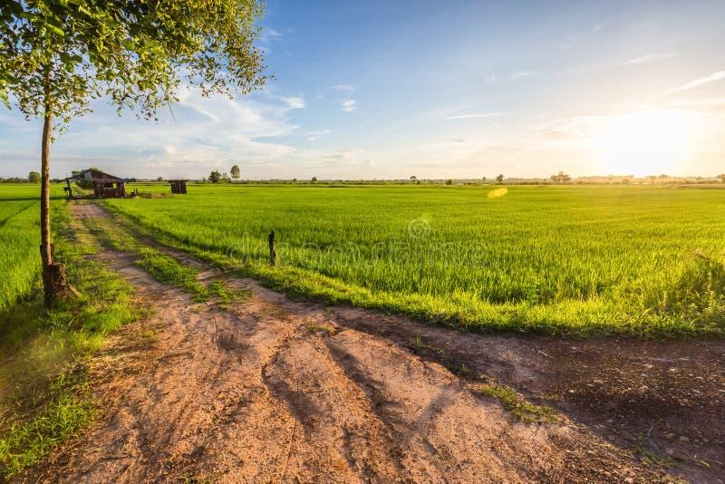Αγρόκτημα ρυζιού ηλιοβασιλέματος στοκ εικόνα με δικαίωμα ελεύθερης χρήσης