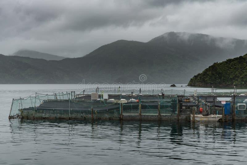 Αγρόκτημα σολομών βασιλιάδων στον κόλπο Ruakaka, Νέα Ζηλανδία στοκ εικόνες με δικαίωμα ελεύθερης χρήσης