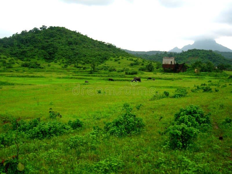 Αγρόκτημα στην πράσινη επαρχία στοκ εικόνες