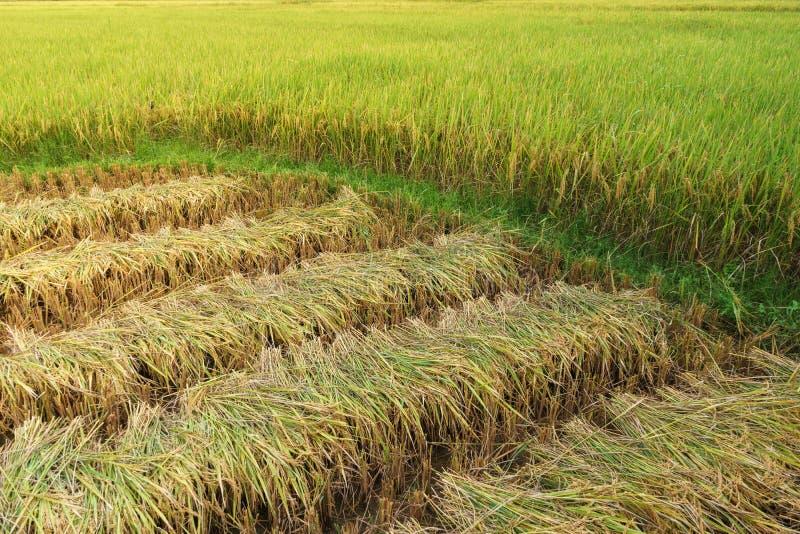 Αγρόκτημα Ταϊλανδού στοκ εικόνα με δικαίωμα ελεύθερης χρήσης