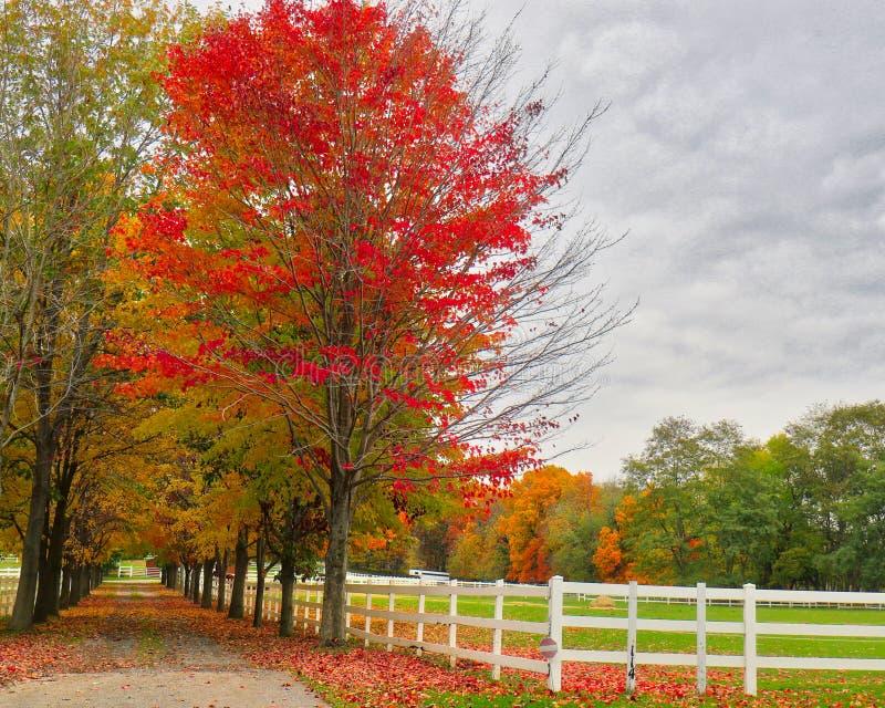 Αγρόκτημα το φθινόπωρο 2 αλόγων στοκ εικόνα