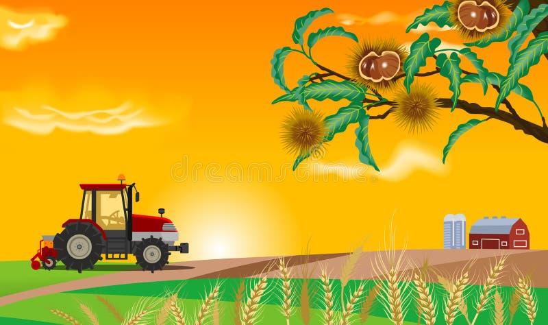 Αγρόκτημα φθινοπώρου διανυσματική απεικόνιση