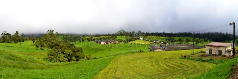 Αγρόκτημα Ambewela στοκ εικόνα