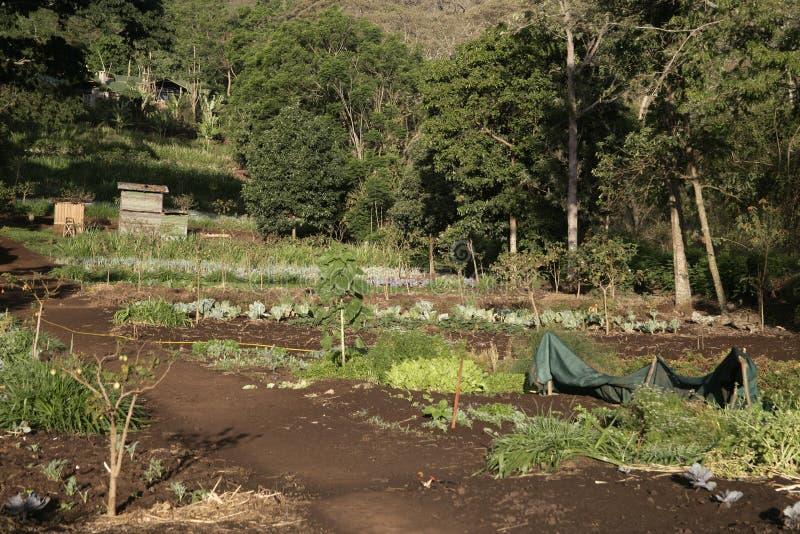 Αγρόκτημα Gibb, στοκ εικόνα με δικαίωμα ελεύθερης χρήσης