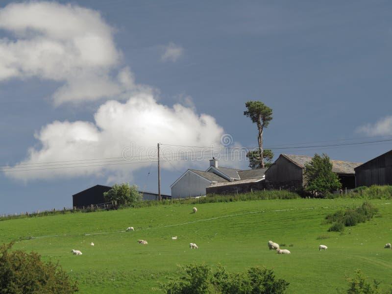 Αγρόκτημα Hill γκρίζο, παλαιός, με την ενιαία υψηλή εξουσίαση δέντρων στοκ φωτογραφία με δικαίωμα ελεύθερης χρήσης