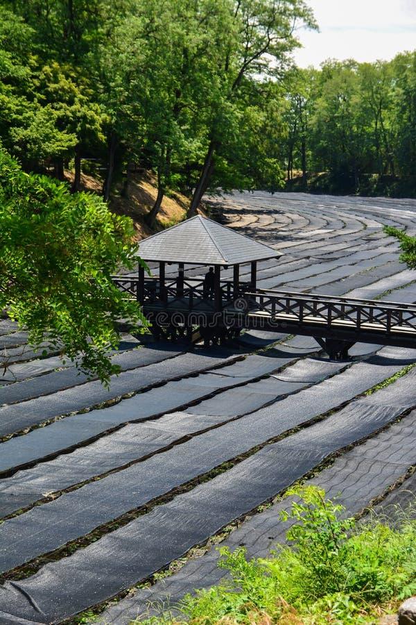 Αγρόκτημα Wasabi στοκ εικόνα με δικαίωμα ελεύθερης χρήσης