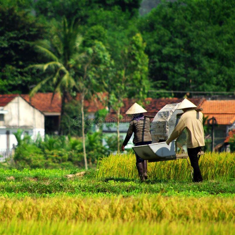 αγρότες βιετναμέζικα στοκ φωτογραφίες με δικαίωμα ελεύθερης χρήσης