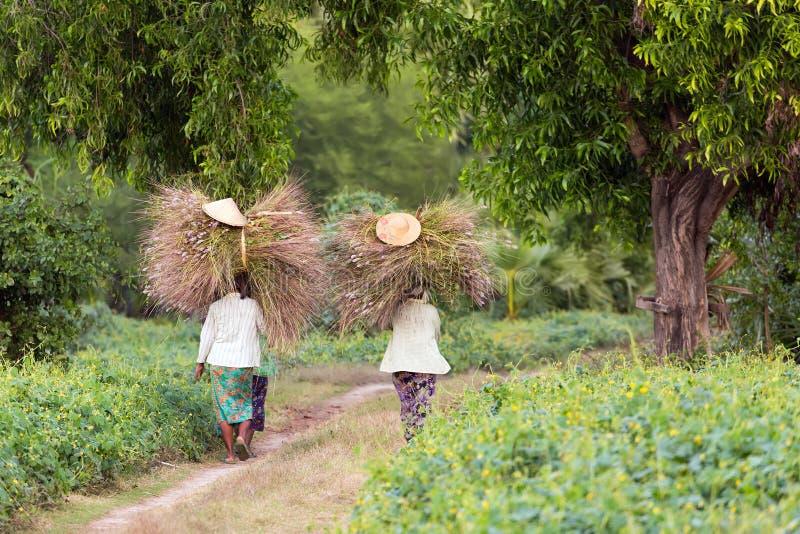 Αγρότες γυναικών που φέρνουν το σανό στοκ φωτογραφία