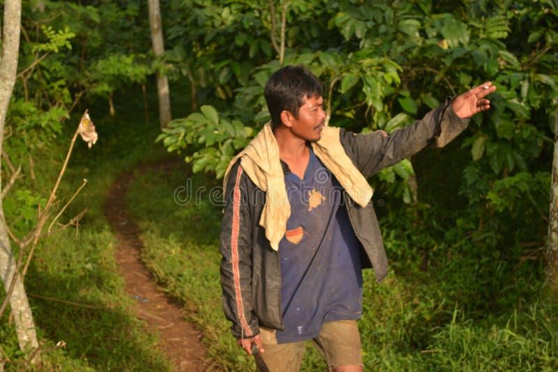 Αγρότες καφέ στοκ φωτογραφίες με δικαίωμα ελεύθερης χρήσης