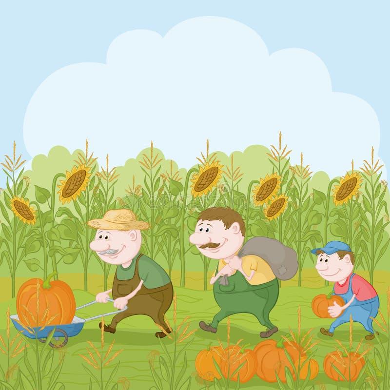 Αγρότες με τη συγκομιδή των κολοκυθών απεικόνιση αποθεμάτων