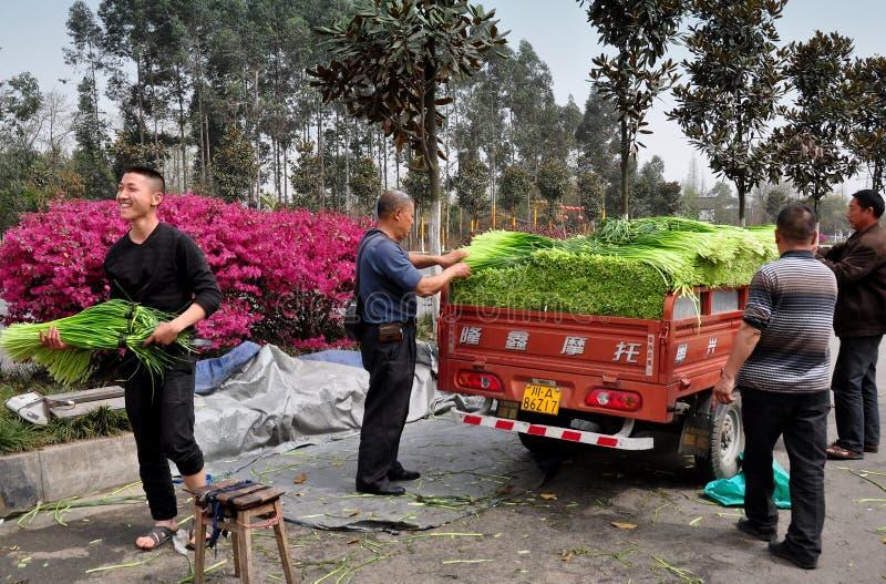 Pengzhou, Κίνα: Αγρότες με τα πράσινα σκόρδου στοκ φωτογραφία