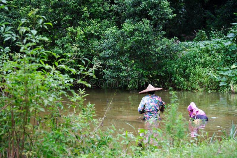 αγρότες της Κίνας που βρί&sigm στοκ φωτογραφία