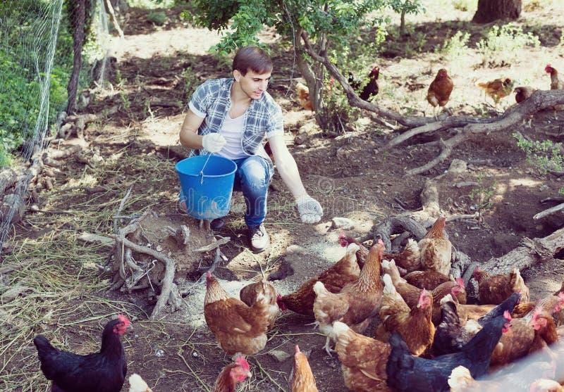 Αγρότης ατόμων που σκορπίζει τη χορτονομή πουλιών στο ναυπηγείο χωρών με τα κοτόπουλα στοκ φωτογραφία με δικαίωμα ελεύθερης χρήσης
