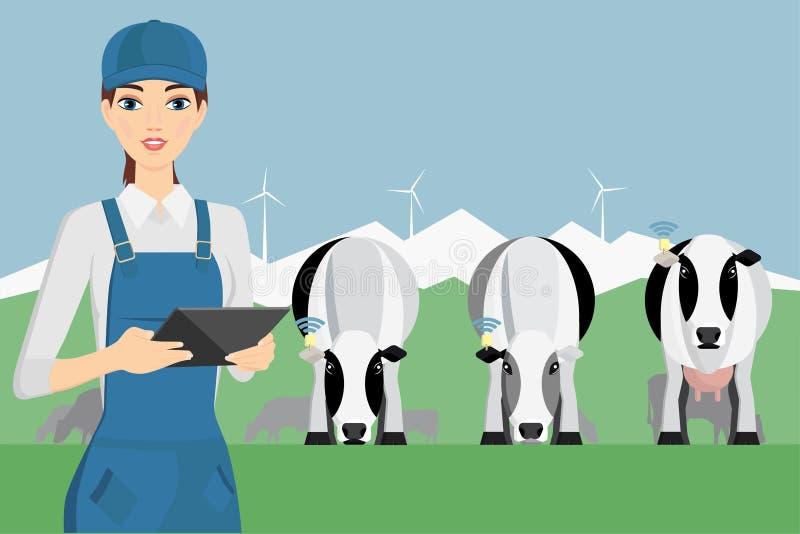 Αγρότης γυναικών με την ψηφιακή ταμπλέτα σε μια βοσκή βοοειδών απεικόνιση αποθεμάτων