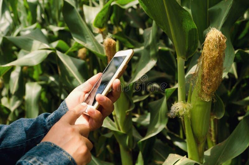 αγρότης γυναικών με το κινητό τηλέφωνο στα χέρια στοκ εικόνες