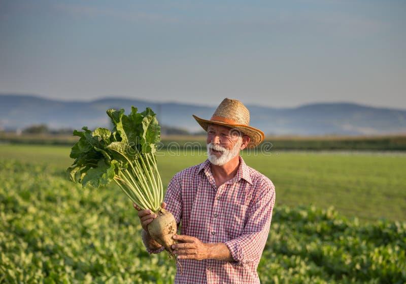 Αγρότης με ζαχαρότευτλα στοκ εικόνες με δικαίωμα ελεύθερης χρήσης