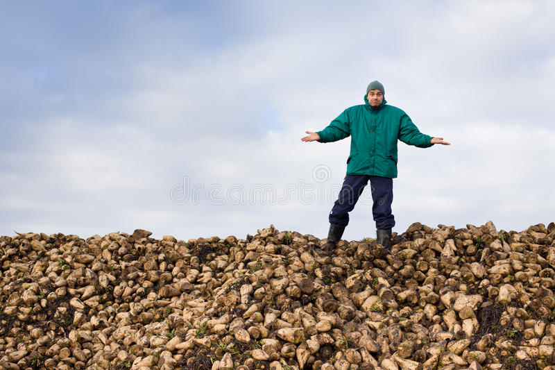 Αγρότης με το σακχαρότευτλο στοκ φωτογραφίες με δικαίωμα ελεύθερης χρήσης