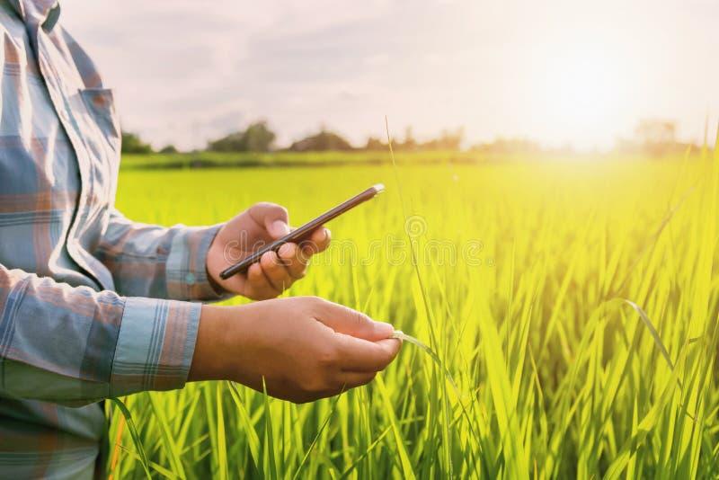 αγρότης που χρησιμοποιεί την κινητή έκθεση ελέγχου της γεωργίας στοκ φωτογραφίες με δικαίωμα ελεύθερης χρήσης