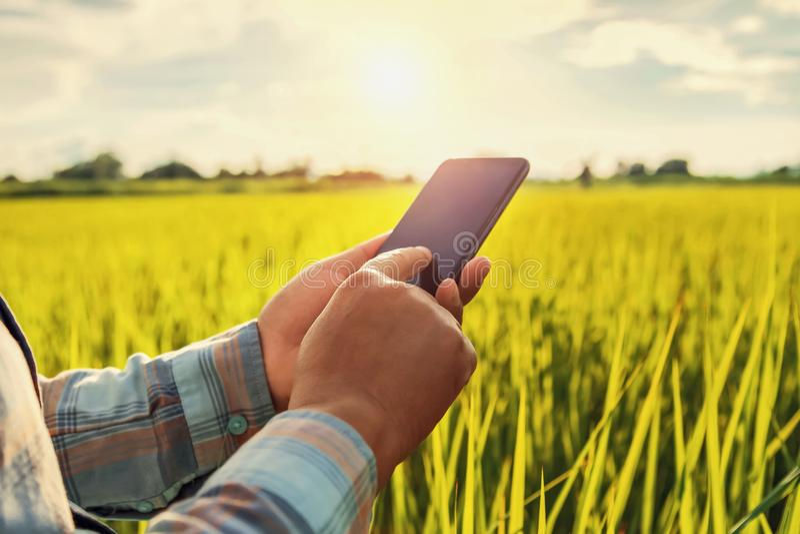 αγρότης που χρησιμοποιεί την κινητή έκθεση ελέγχου της γεωργίας στοκ φωτογραφία με δικαίωμα ελεύθερης χρήσης