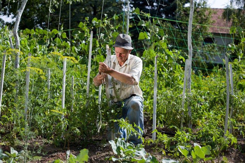 Αγρότης στο φυτικό κήπο στοκ φωτογραφία