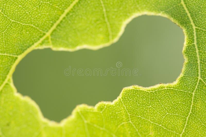 ?αγωμένη τρύπα σε ένα πράσινο φύλλοφαγωμένη στοκ φωτογραφία με δικαίωμα ελεύθερης χρήσης