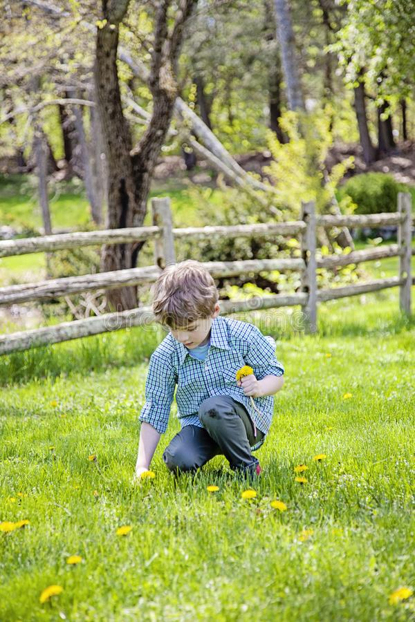 Αγόρι έξω από τα λουλούδια επιλογής στοκ εικόνες