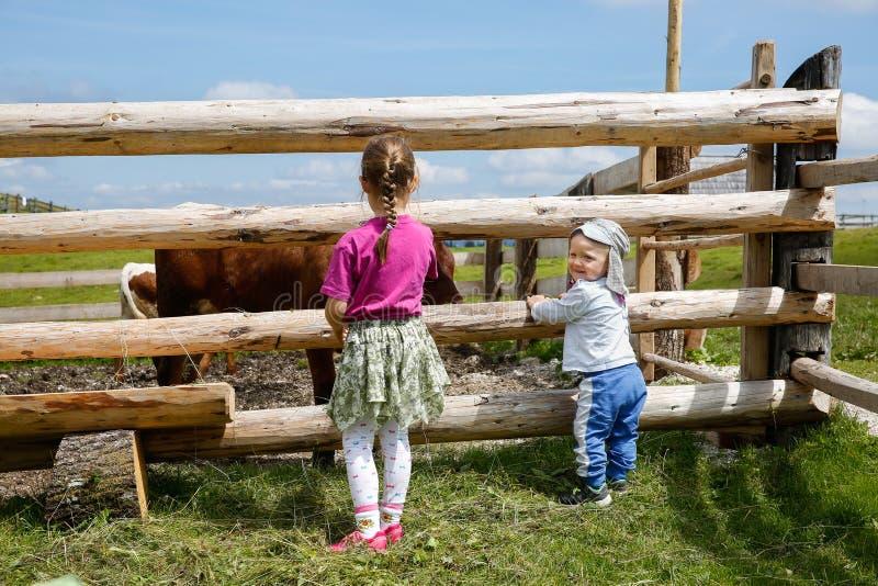 Αγόρι και ένα κορίτσι που απολαμβάνει υπαίθρια, που παρατηρεί τις αγελάδες σε ένα αγρόκτημα στοκ εικόνα