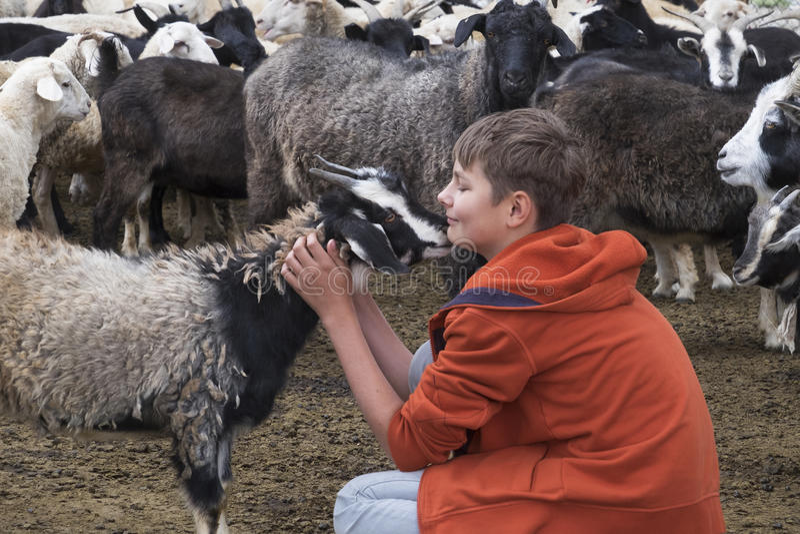 Αγόρι και μια αίγα στοκ φωτογραφίες με δικαίωμα ελεύθερης χρήσης