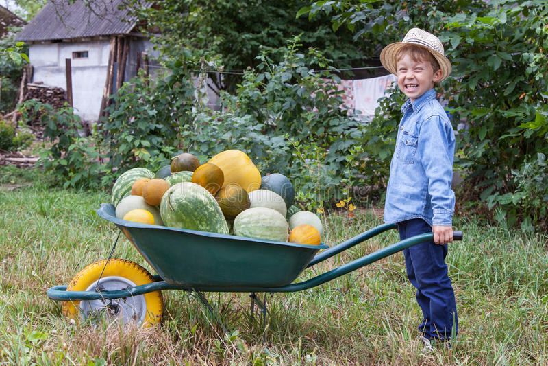 Αγόρι με wheelbarrow στον κήπο στοκ εικόνες