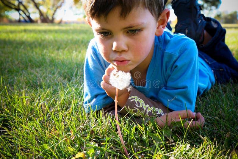 Αγόρι πικραλίδων στοκ φωτογραφία με δικαίωμα ελεύθερης χρήσης