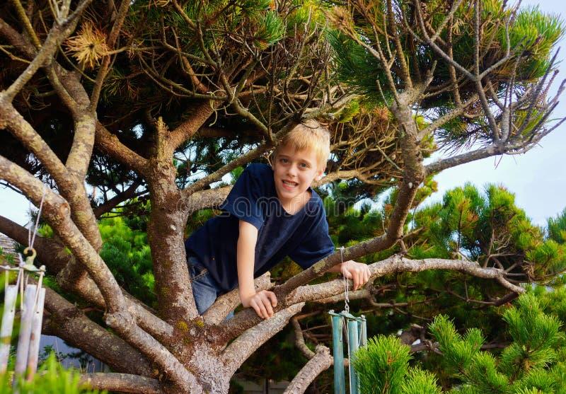 αγόρι που αναρριχείται στις νεολαίες δέντρων στοκ εικόνες