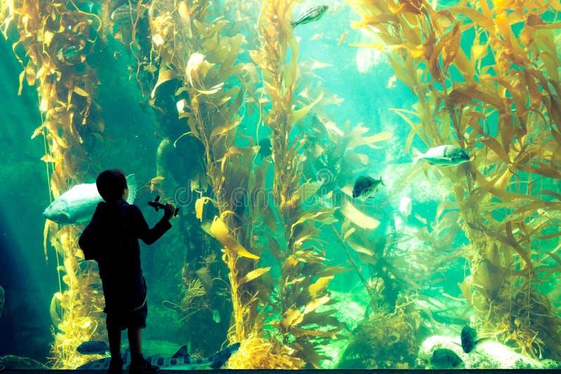 Αγόρι που στέκεται και kelp θαυμασμού δάσος στοκ εικόνα