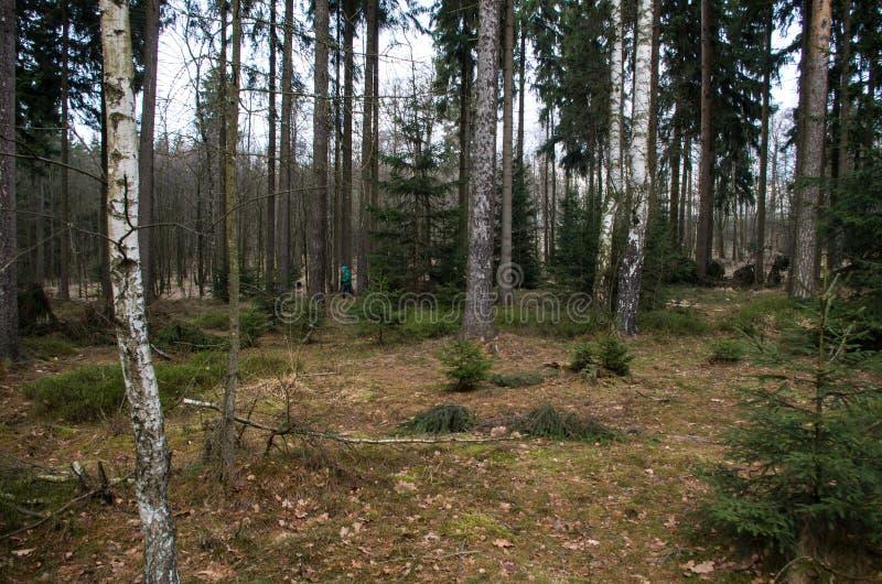 Αγόρι που ψάχνει geocache στο δάσος στοκ εικόνες
