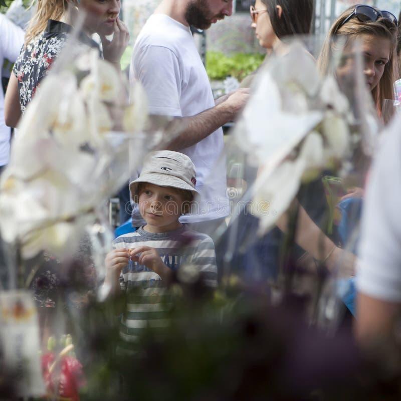Αγόρι στον Παναμά που εξετάζει τις ορχιδέες στην αγορά λουλουδιών της Κολούμπια στοκ φωτογραφίες με δικαίωμα ελεύθερης χρήσης