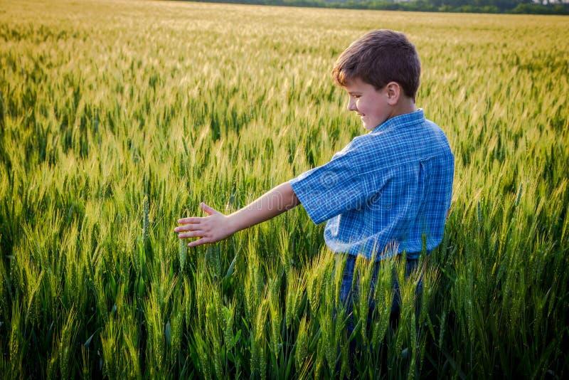 Αγόρι σχετικά με τα πράσινα αυτιά του σίτου στον τομέα στοκ φωτογραφίες με δικαίωμα ελεύθερης χρήσης