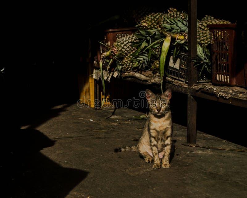 Αδέξια γάτα στοκ φωτογραφίες