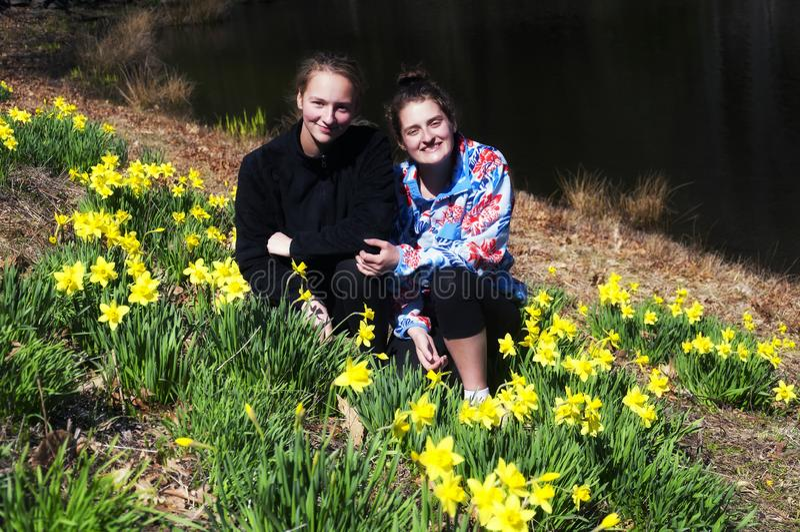 Αδελφές σε έναν τομέα daffodil σε Thomaston Κοννέκτικατ στοκ εικόνα