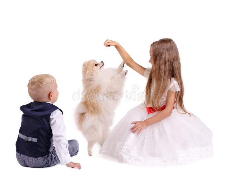 Αδελφός και αδελφή που έχουν τη διασκέδαση με ένα κουτάβι που απομονώνεται σε ένα άσπρο υπόβαθρο Παιδιά που παίζουν με ένα σκυλί  στοκ εικόνες