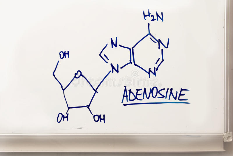 αδενοσίνη στοκ φωτογραφίες με δικαίωμα ελεύθερης χρήσης