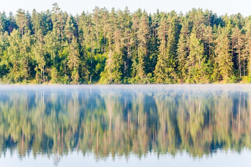 Αειθαλές πεύκο και κομψό δάσος δέντρων κωνοφόρων και σημύδων επίσης με την αντανάκλασή του στην επιφάνεια λιμνών στην ανατολή στοκ εικόνες με δικαίωμα ελεύθερης χρήσης