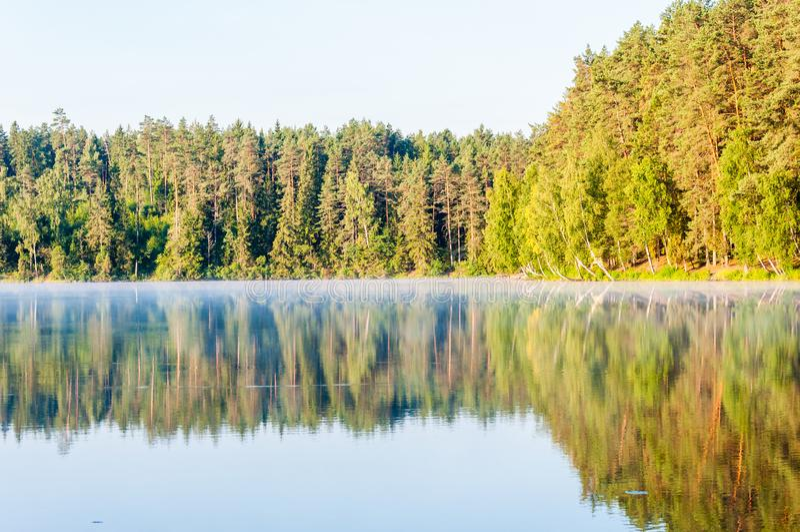 Αειθαλές πεύκο και κομψό δάσος δέντρων κωνοφόρων και σημύδων επίσης με την αντανάκλασή του στην επιφάνεια λιμνών στην ανατολή στοκ φωτογραφία με δικαίωμα ελεύθερης χρήσης