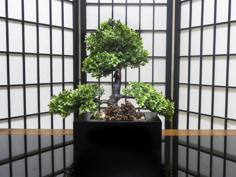αειθαλές μικροσκοπικό δέντρο πεύκων μπονσάι στοκ εικόνα
