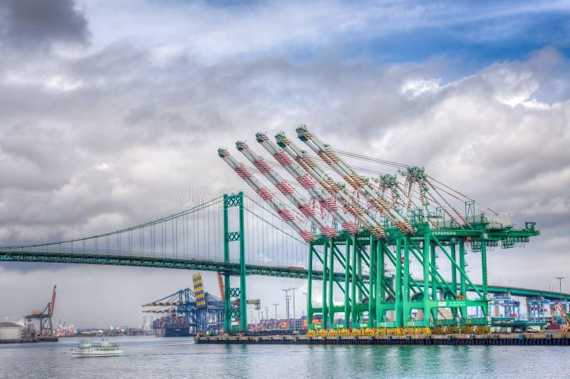 Αειθαλείς θαλάσσιοι γερανοί εμπορευματοκιβωτίων εταιριών στο λιμένα του ANG Los στοκ φωτογραφία