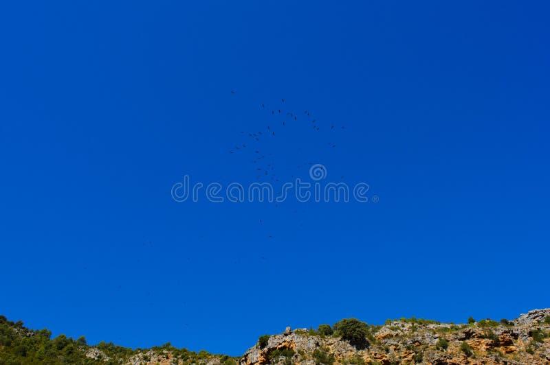 Αετοί που πετούν στον ουρανό στοκ εικόνες με δικαίωμα ελεύθερης χρήσης