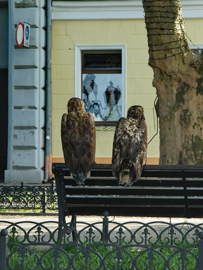 Αετοί στην πόλη στοκ εικόνα
