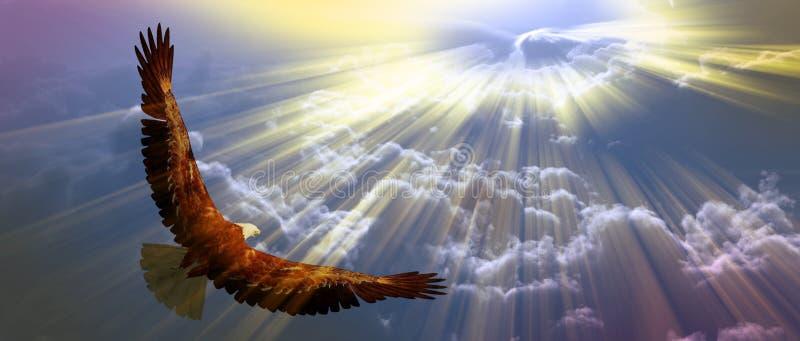 Αετός κατά την πτήση ελεύθερη απεικόνιση δικαιώματος