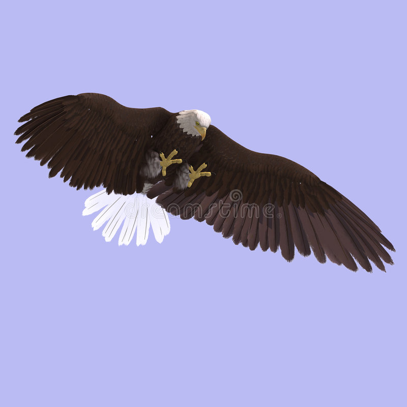 αετός μεγάλος απεικόνιση αποθεμάτων