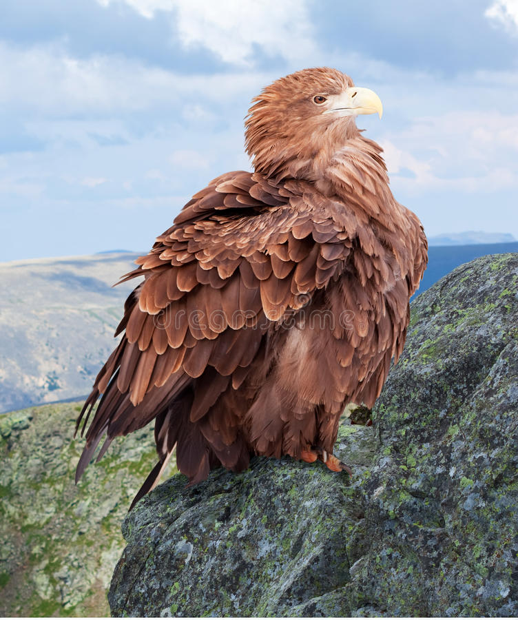 Αετός στο βράχο στοκ φωτογραφίες με δικαίωμα ελεύθερης χρήσης