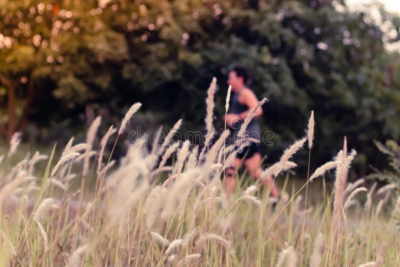 Αθλητής δρομέων που τρέχει μεταξύ της άγριας χλόης πάρκων φύσης στοκ εικόνες